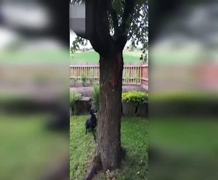 Sincap köpeği çıldırttı