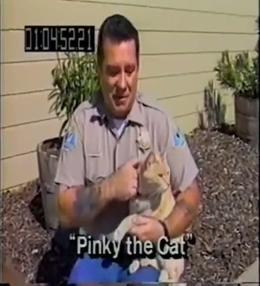 Çıldıran kediyi kimse tutamadı