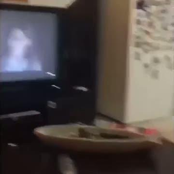 Korku filmi izleyen köpeğin efsanevi sevimli tepkisi