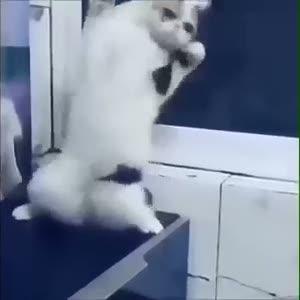 Oyun havasında yerinde duramayan kedi