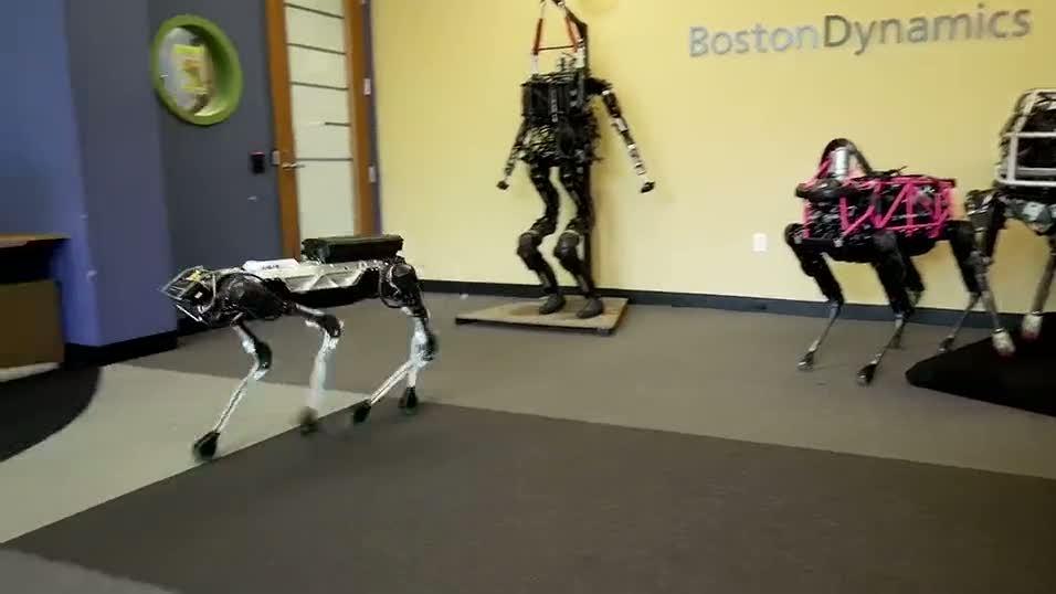 Tüm işleri yapabilen robot hayvan