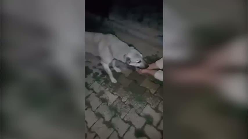 Susuz kalmış köpeğe, avucundan su içirdi