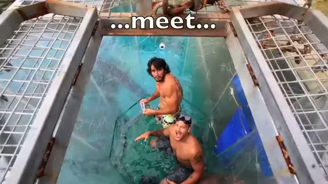 Avustralya'da timsah havuzu!