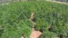 Diyarbakır'da uyuşturucu rekoru kırıldı!