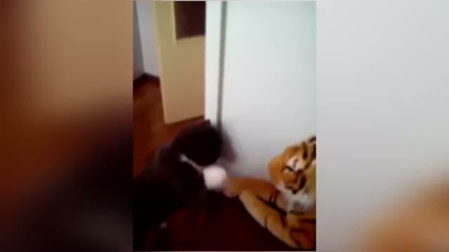 Asabi kedi kaplana gününü gösterdi