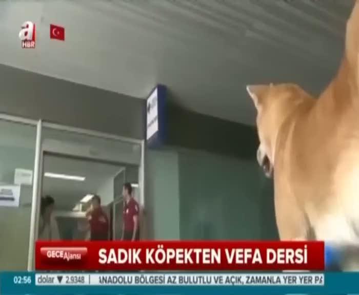 Sadık köpekten vefa dersi