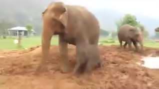 Yavru filin mutluluğu