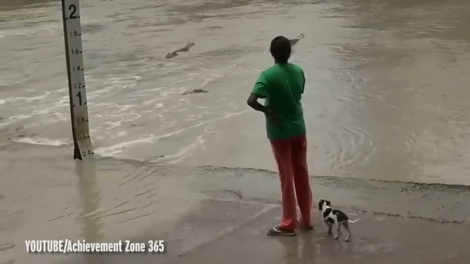 Dev timsahı terlikle kovaladı