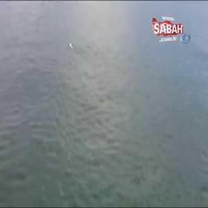 Denizin ortasında mahsur kalan kedi böyle kurtarıldı