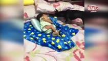 Uyuyan bebeği örten köpek