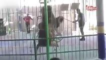 Sirk aslanları bakıcıyı parçaladı