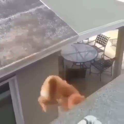 Ayarı tutturamayan kedinin geçirdiği feci kaza!