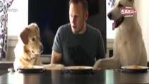 İki köpek ve bir adam spagetti yeme yarışına girerse!