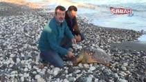 Hayvanseverlerin seferber olduğu caretta caratta öldü