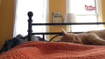 Sabahın 4'ünde kedisi tarafından uyandırılan adamın intikamı