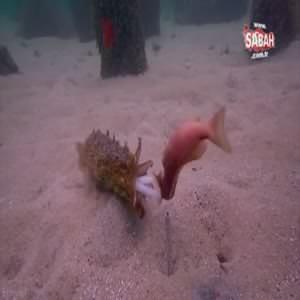 İşte denizlerin acımasız avcısının inanılmaz hilesi!