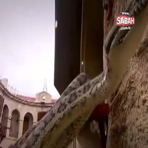 İmane Elbani yılanların arasında kaldı!
