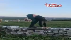 Yoga eğitmeni ineklerin önünde antrenman yaparsa