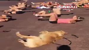 Kadın kürek takımının antrenmanına katılan köpek